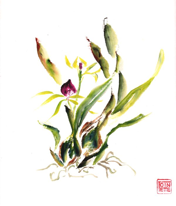 Toinette Lippe painting - Orchid1
