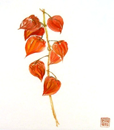 Toinette Lippe painting - Cape Gooseberries