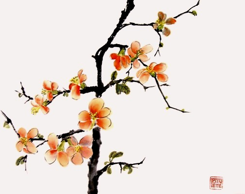 Toinette Lippe - Japanese Quince